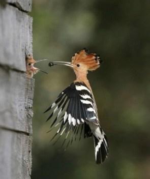 Birdy Feeding Time