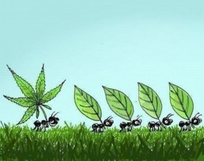 Weed Ant