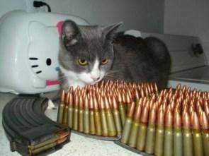 ammo cat