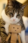 boxboy with cat