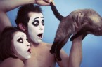 mime anal cat shock