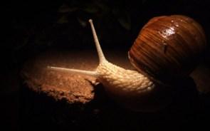 slimey snail