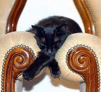 Sleep Little Kitty; Sleep