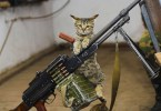 Ammo Cat – Armed and ready
