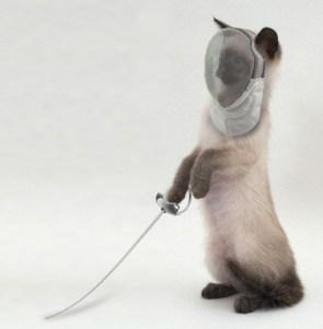 Fencing Cat