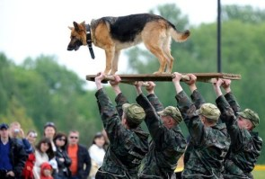 dog lifters