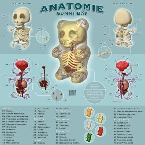 Anatomy Lesson