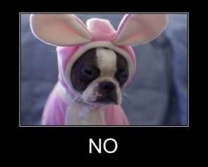 no dog