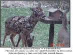 widespread cutaneous fibromas on a white-tailed deer