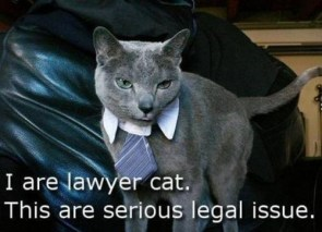 I are lawyer cat – this are serious legal issue