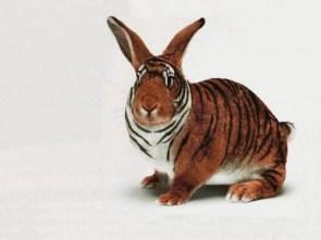 tiger bunny