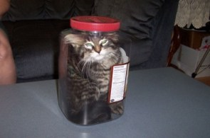 cat in jar