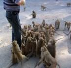 expectent monkeys