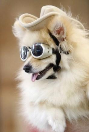 goggly dog