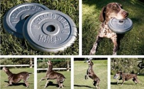 humorous flying disk for strong dogs