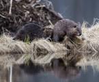 100 Days in Glacier National Park (Animal Edition)