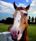 Playboy <strike>Bunny</strike>&#8230;err&#8230;uh&#8230;Horse