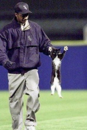 There's No Cats in Baseball!