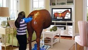 Fake horse anus