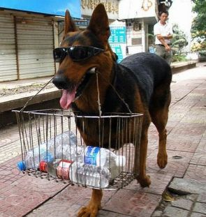 doggy water carrier