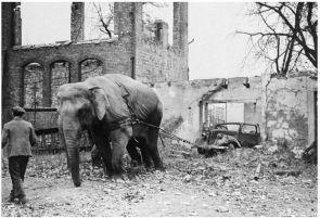 elephant car service
