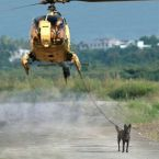helicoptor dog walker