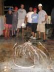 massive squid