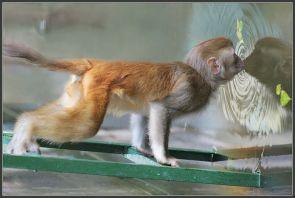 monkey kissing water