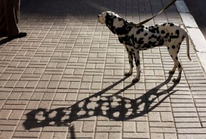 spotted dog shadow