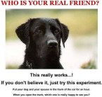 who is your real friend