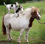 Dog On Horse