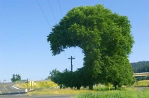 creative tree pruning