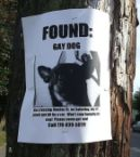 found – gay dog