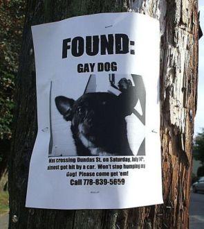 found – gay dog