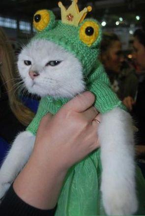 frog cat