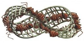 infinite ants