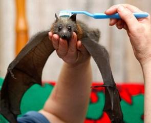 batbrush