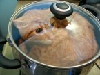 cat in pot on stove