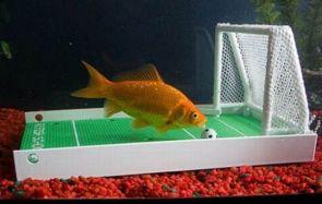 gold fish soccer