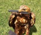 hawk with knife