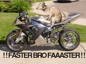 faster bro faaaster
