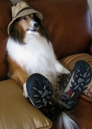 dog with shoes and hat