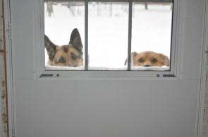 dogdoor