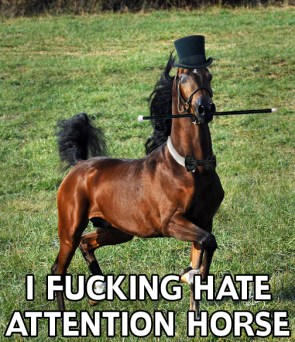 i fucking hate attention horse