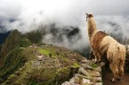llama view