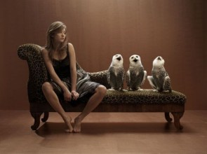 owl couch