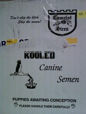 kooled canine semen