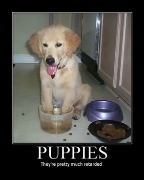 puppies – they're pretty much retarded