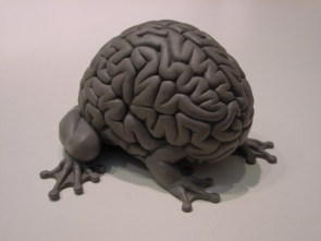 Brain Toad