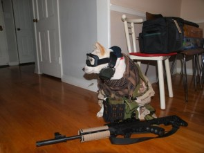 tactical dog